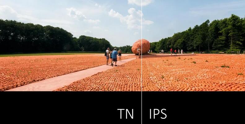 TN vs. IPS